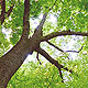Noch mehr Grün für den Südstadtpark. Im Herbst werden weitere Bäume gepflanzt.