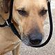 Die Stadt Fürth appelliert an Hundebesitzer, für ein besseres und faires Miteinander rechtliche Bestimmungen einzuhalten.
