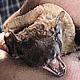 """Zu Besuch in der Fledermausauffangstation erfährt man viel Interessantes und Wissenwertes über die filigranen """"Kobolde der Nacht""""."""