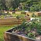 """Mit dem """"Lionsgarten"""" auf der Hardhöhe ist auf 1500 Quadratmetern ein weiterer Ort für gemeinschaftliches Gärtnern eröffnet worden."""