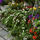 Auch wenn der Gartenmarkt in diesem Jahr ausfallen muss, können sich die Fürtherinnen und Fürther mit Pflanzen und Naturprodukten eindecken.
