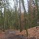 In einem Forstwirtschaftsplan legt die Stadt Fürth für die kommenden 20 Jahre die Bewirtschaftungsziele für den Stadtwald fest.