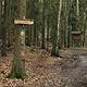 """Die Stadt Fürth wurde für ihre gelungene Bewirt- schaftung des Stadtwaldes mit dem """"Wald-vor-Wild-Preis"""" des Ökologische Jagdvereins ausgezeichnet."""