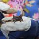 Verletzte oder geschwächte Fledermäuse werden ab jetzt in einer Aufzuchtstation in Burgfarrnbach auf die Auswilderung vorbereitet.