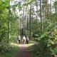 1957 beschloss der Stadtrat die Neuausrichtung des Stadtwalds. Seitdem hat sich das Areals zum beliebten Ausflugsziel entwickelt.
