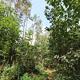 Der weitsichtige Stadtratsbeschluss von 1957, den Stadtwald vom reinen Nadel- zum Mischwald umzu- bauen, macht Fürths grüne Lunge widerstandsfähiger.