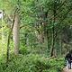 Trotz zahlreicher Neubauten wird die Kleeblattstadt immer grün. Allein in den vergangenen zehn Jahren kamen 68 000 Quadratmeter Wald dazu.