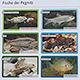 Ein neuer Fisch-Lehrpfad entlang der Pegnitz erklärt auf acht Schautafeln die heimische Fischvielfalt und schafft ein Bewusstsein für den Gewässerschutz.