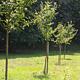 Auf ehrenamtlicher Basis können Fürtherinnen und Fürther wieder städtisches Grün pflegen. Zu den Aufgaben zählen bspw. die Bewässerung von Bäumen.