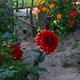 Ein Komposthaufen darf im Garten nicht fehlen. Am Balkon oder in der Wohnung können die Würmer in einer Kiste ihrem Tagwerk nachgehen.