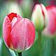 Die Einzelhändler der Innen- und Altstadt laden am 26. März zum verkaufsoffenen Sonntag ein. Auf der Freiheit findet bis 2. April der Frühlingsmarkt statt.