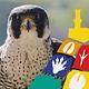 Der siebte Fürther Tag der Artenvielfalt lädt am Sonntag, 19. Juni in den Schlosspark in Burgfarrnbach ein.